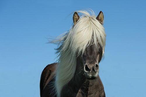 lo-que-en-la-vida-sucede-conviene-caballo